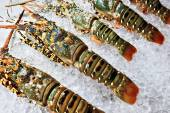 Lobsters on ice in store — Stock Photo