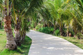 Road to the palm grove — Stock Photo