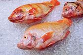 Marine fish on ice — Stock Photo