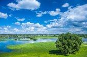 Flowed field in spring — Stock Photo