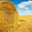 Roll of bale straw on harwested field — Stock Photo #53016827