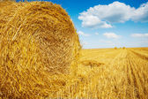 Roll of bale straw on harwested field — Stock Photo