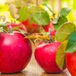 Ripe apples — Stock Photo #54304003
