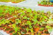 Small seedlings — Stock Photo