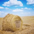 Bale of a straw on harwested field instagram colors — Stock Photo #56518683