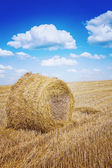 Bale of a straw on harwested field instagram colors — Photo