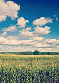 Corn field and cloudy sky instagram stile — Zdjęcie stockowe