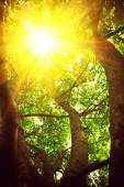 View through crone of the tree with translucent sun instagram st — Stock Photo