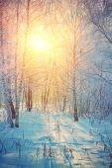 Sunrise in winter birch forest — Stock Photo