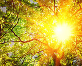 Translucent sun through branches — Stock Photo