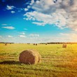 Harvested field with bales — Stock Photo #59209901