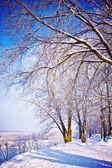 Snowed trees in winter park — Stock Photo