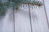 Branch of pinetree on old white boards — Stock Photo