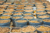 Pots for growing seedlings — Stock Photo