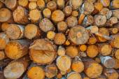 Close up view on woods pile — Stock Photo