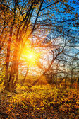 Leafless autumn forest — Stock Photo