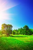 View on summer landscape — Stock Photo