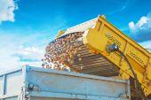 Loadding potato into tipper at harvest — Stock Photo