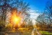 Autumn forest over sunset — Stock Photo