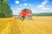 Combine harvester on field — Stock Photo