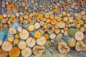 Wooden logs pile — Stock Photo