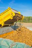 Loading of potato on harvest — Stock Photo