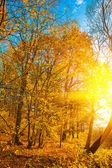 Autumn forest with sunset — Stock Photo