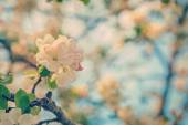 Flower of cherry tree on twig — Stock Photo