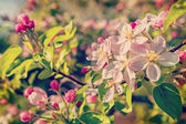 Floral spring background — Stock Photo