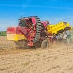 Potato harvester in work — Stock Photo #69626425