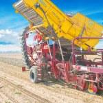 Potato harvester in work — Stock Photo #69627543