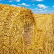 Bale of straw on harvesting field — Stock Photo #69628521