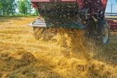 Combine harvester in work — Stock Photo
