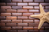 Starfish on checked wooden place mat — Stock Photo