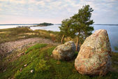 Evening watchers, two stones and dwarf pines, Baltic — Stock Photo
