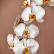 Bunch of orchid flowers on brown background — Stock Photo #53068383