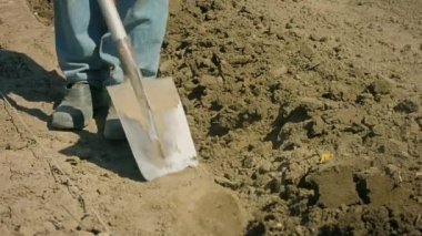 1080p video - Digging of arable land with a shovel - the old way — Stock Video