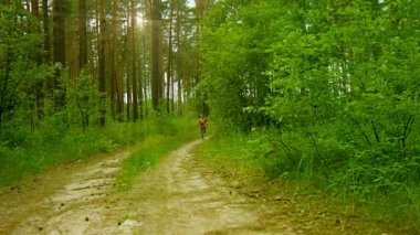 1080p video - Happy kid running along the road in the sunny summer pine forest — Stock Video