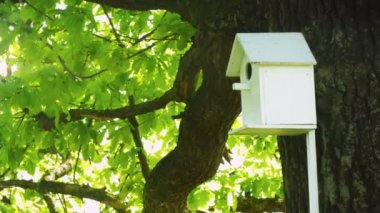 1920x1080 video - Wooden house for birds fixed on the tree trunk — Stock Video