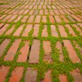 Creepers Growing Around the Edges of Brick Pavers — Stock Photo