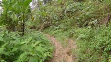 Hiking along a Narrow Track in a Thai Jungle — Stock Video