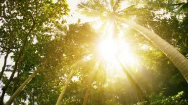 Sun rays through the tropical trees and palms — Stock Video