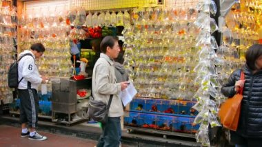 Pet shop in Hong Kong displays dozens of brightly colored tropical fish in transparent plastic bags hangin from racks outside the store. — Stockvideo