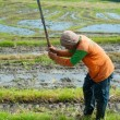 Rice worker, Indonesia — Stock Photo #54528143