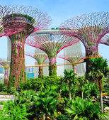 Singapore Gardens by the Bay — Stock Photo