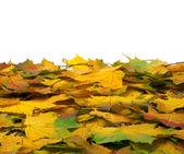 Hösten blad — Stockfoto