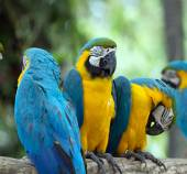 Parrots birds — Stock Photo