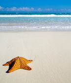 Starfish over beach — Stock Photo