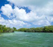 Mangrove trees in sea — Stock Photo