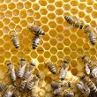 Bees on honeycells — Stock Photo #56491235